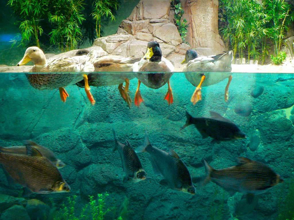 telecharger ecran de veille aquarium