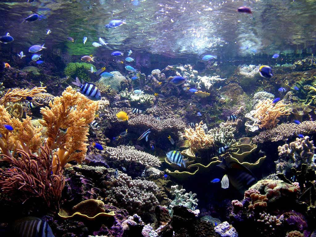 Album photo aquarium fonds marins dinosoria for Fond ecran aquarium