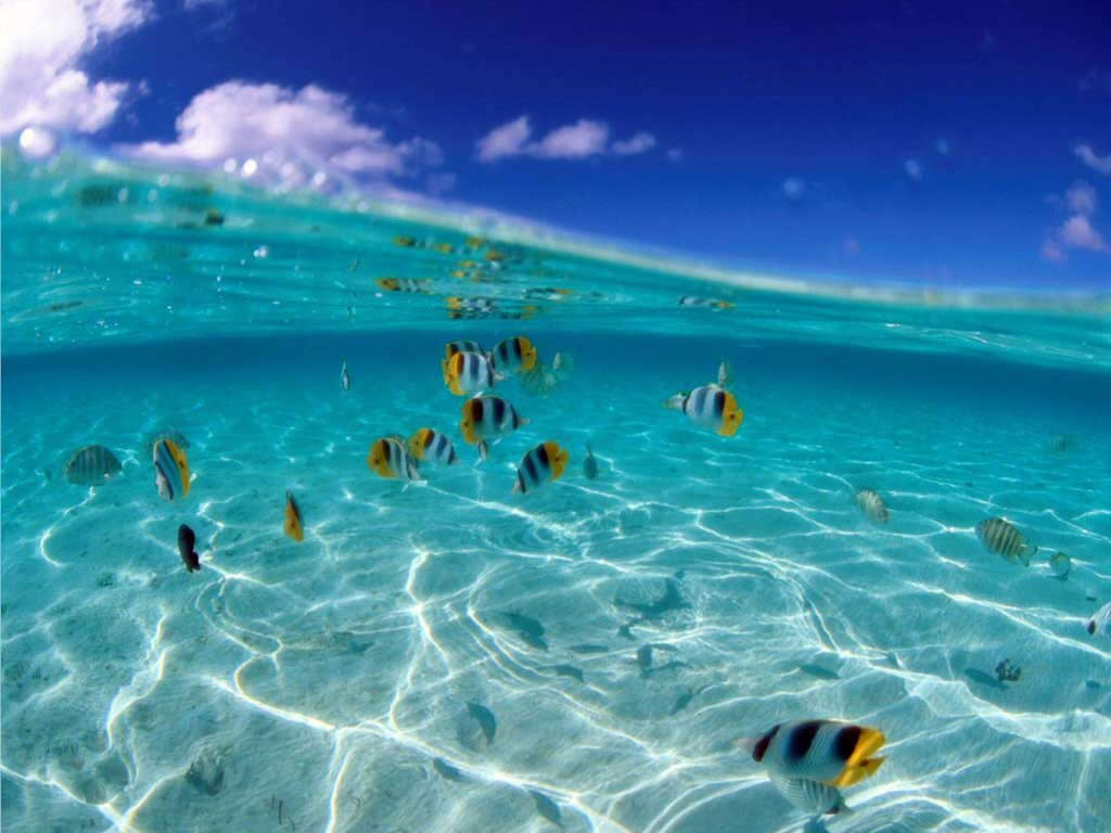Hd Tropical Island Beach Paradise Wallpapers And Backgrounds: Photos Animaux Marins. Dinosoria