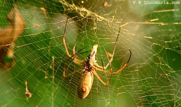 Araignée à l'affût sur sa toile