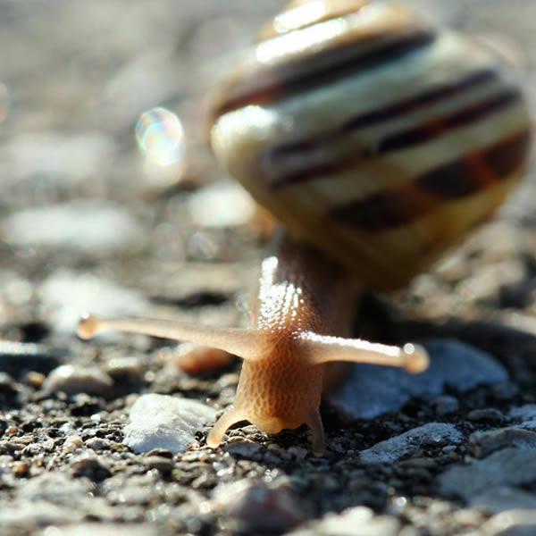 Gros plan sur les antennes de l'escargot