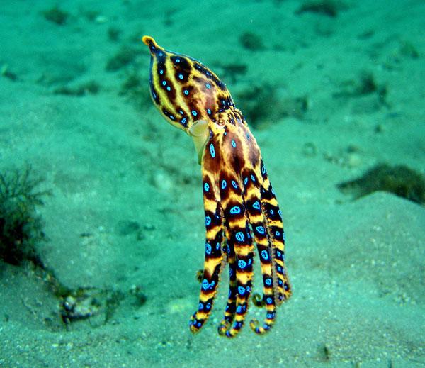 Extrêmement Animaux marins les plus dangereux. Dinosoria CV27