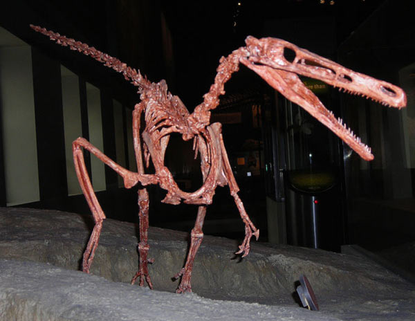Buitreraptor gonzalezorum