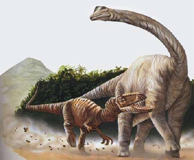 Carcharodontosaurus contre Paralititan