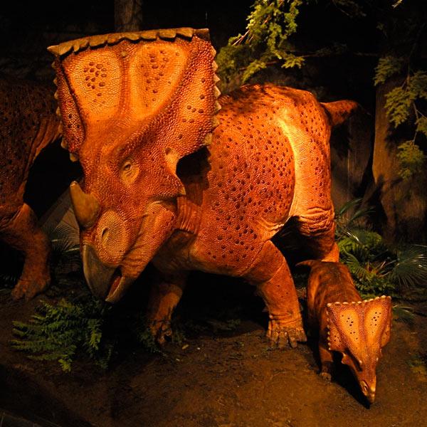 Reconstitution Chasmosaurus