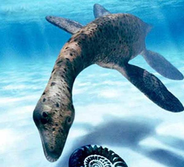 Cryptoclidus. Reptile marin. En Images. Dinosoria