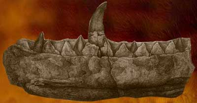 Machoire de Megalosaurus