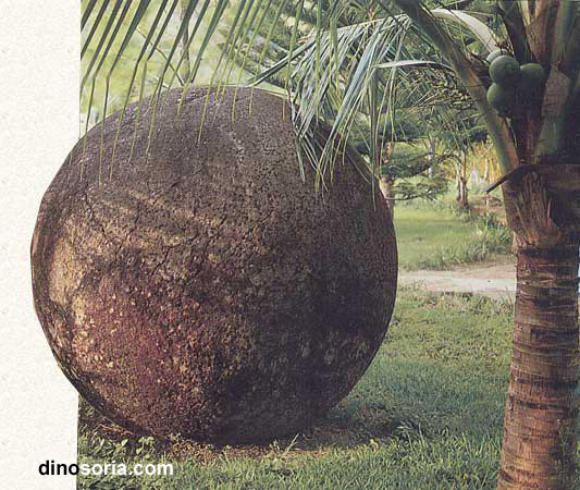 L'énigme des Bolas Grandes du Costa Rica Bolas_001