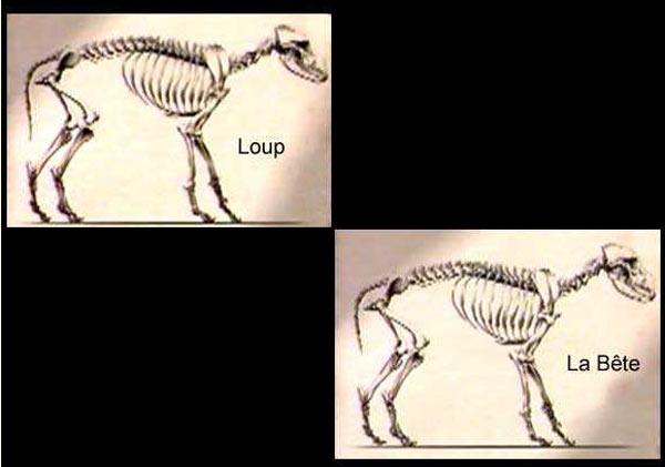 Bete Du Gevaudan Un Mythe Elucide En Images Dinosoria