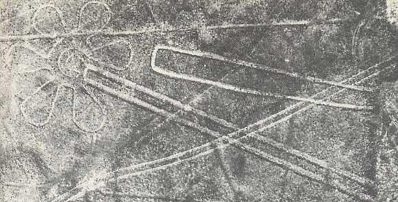 VIDEO TRACES DE NAZCA. dans Traces de Nazca nazca_fleur