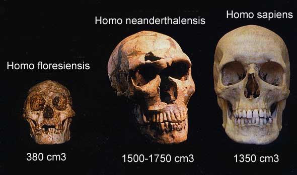 crane homo sapiens prehistoire