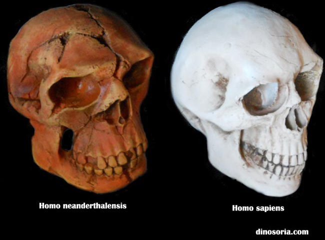 Neandertal et Cro-Magnon