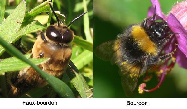 comparaison-bourdon-faux-bourdon