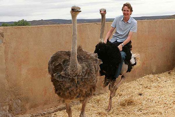 autruche struthio camelus en images dinosoria. Black Bedroom Furniture Sets. Home Design Ideas