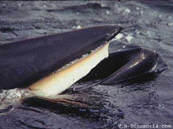 Baleine qui mange