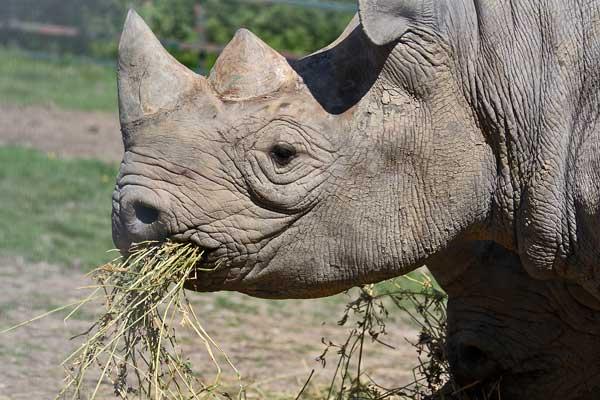 Quelques espèces parmi les plus prisées du négoce illégal