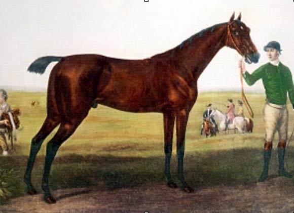 cheval de trait queue