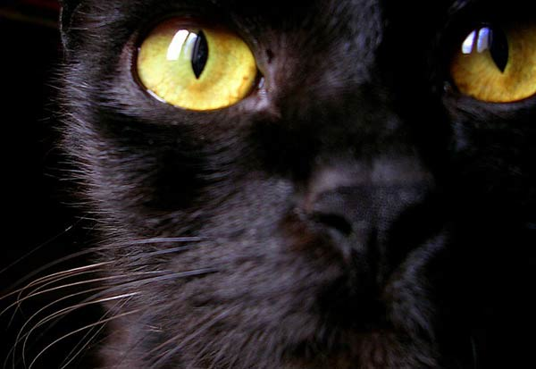 Assez Chat Noir. Superstitions. En Images. Dinosoria JB58