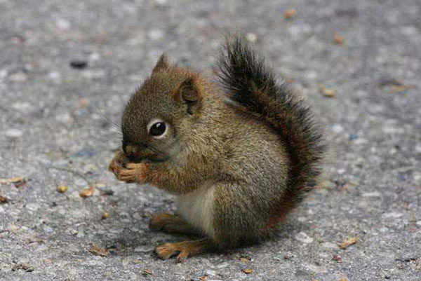 Image Écureuil ecureuil. en images. dinosoria