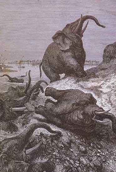 Cimetière des éléphants  dans ELEPHANT elephant-cimetiere