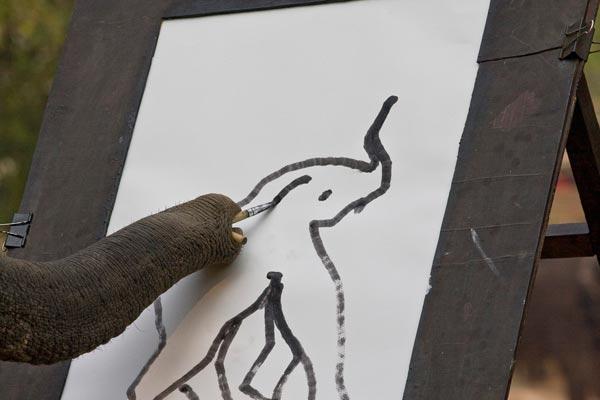 Elephant peintre
