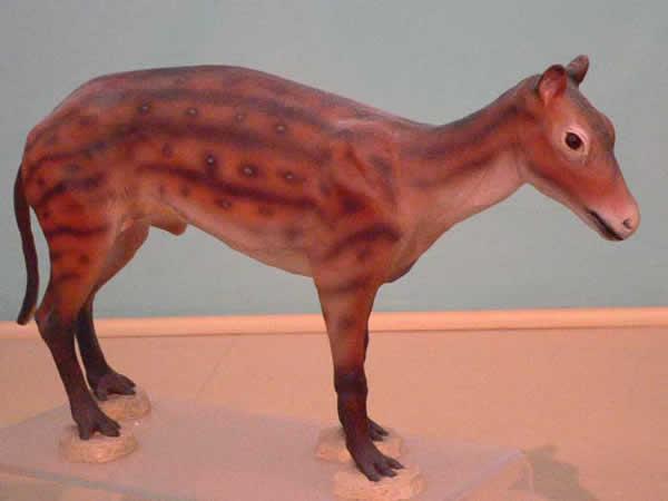 Ouvrages concernant le Cheval Eohippus