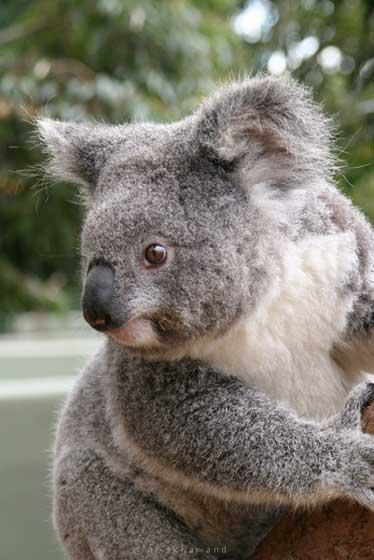 marsupial en 7 lettres
