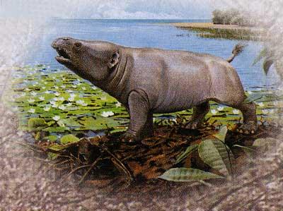 Proboscidiens  Phosphatherium