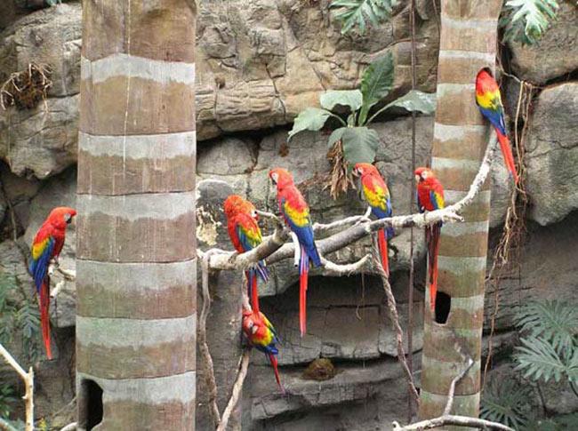 Groupe d'aras rouges
