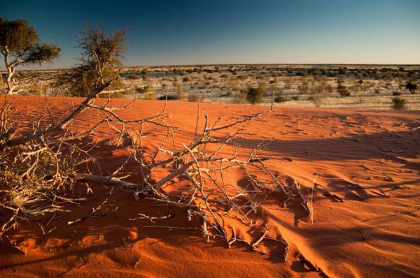 desert de kalahari afrique du sud