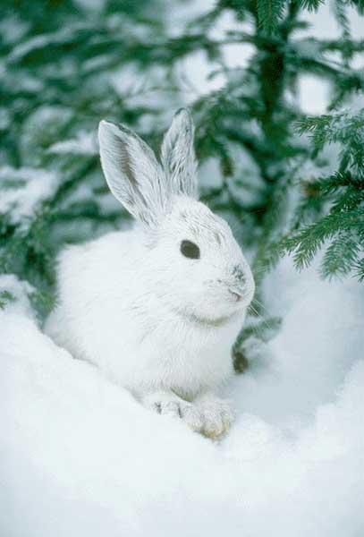 Arctique: Greenpeace appelle à un moratoire sur les activités industrielles