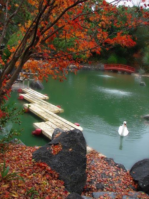 Jardin japonais en images dinosoria for Jardin japonais cholet