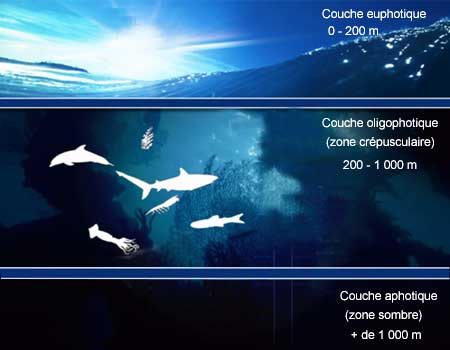 Couches oceaniques