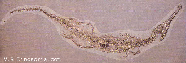 Crocodile du Jurassique