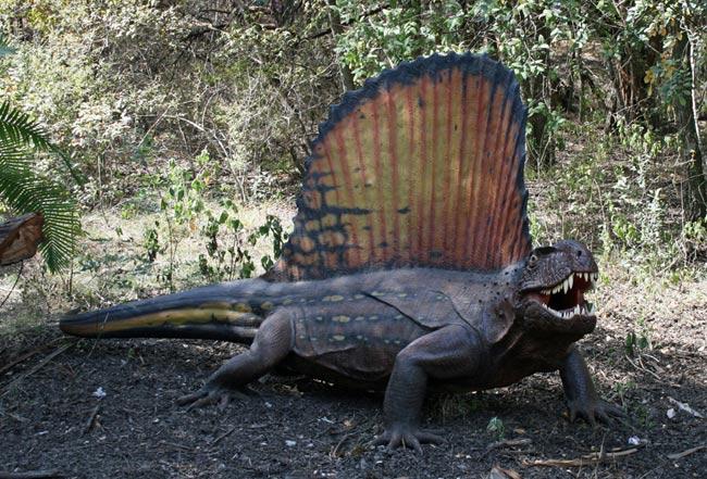 un dimetrodon (famille des pelycosaures)