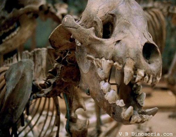 Hyene des cavernes