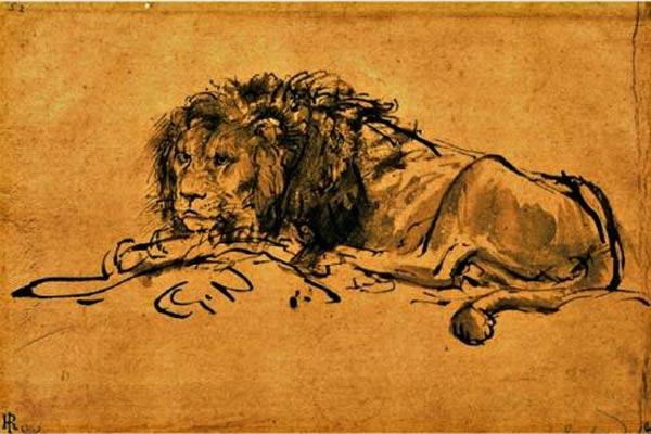 Lion du Cap