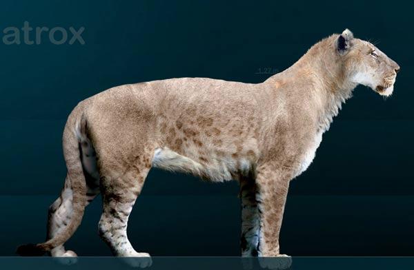 LEONES QUE NO DESARROLLAN MELENA o.0 Lion-cavernes-amerique
