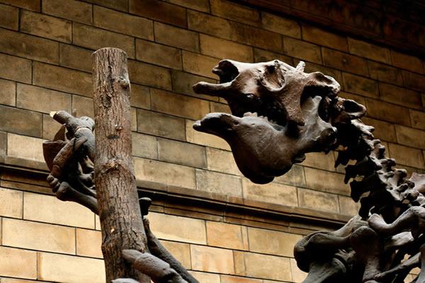 Tete de Megatherium