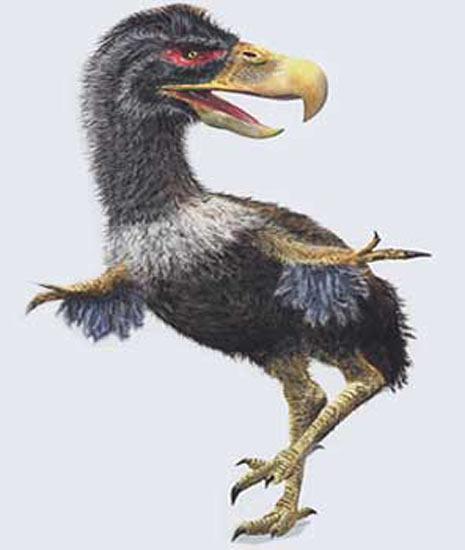 http://www.dinosoria.com/prehistoire/titanis.jpg