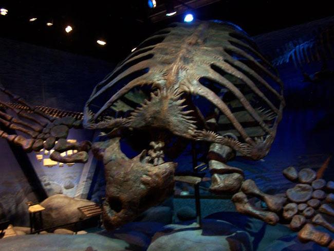 millones de años