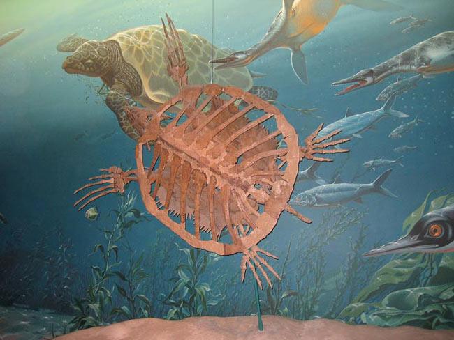 Les lointains ancêtres des tortues sont les crocodiles et les oiseaux