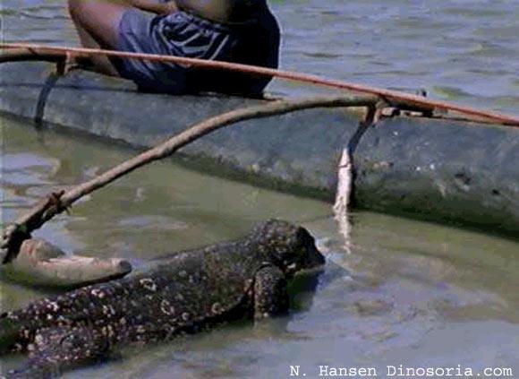 Varan malais qui vole des poissons