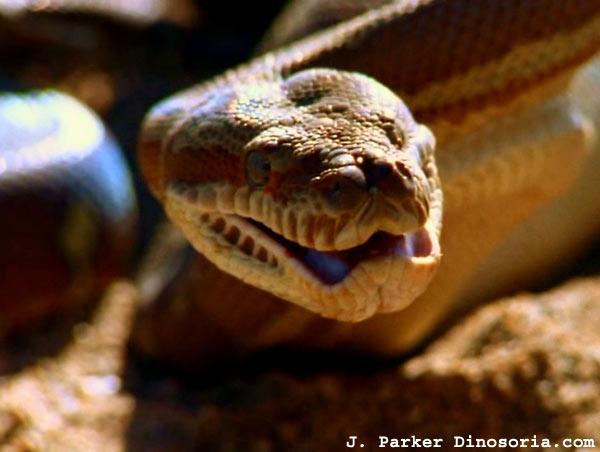 Python En Images Videos Dinosoria